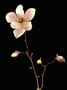 flower-2202834
