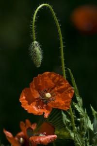 flowers-1307174